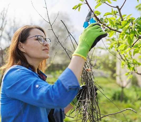 tree pruning with a purpose
