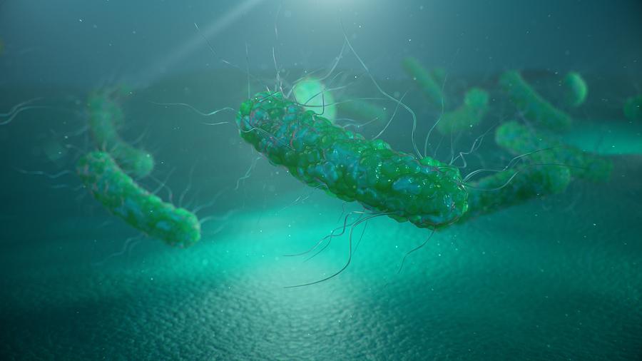 coronavirus a group of viruses