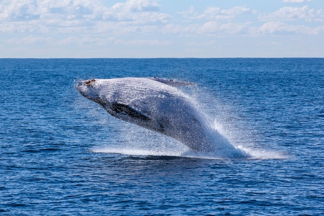 the extraordinary whale-watching experience in Sydney