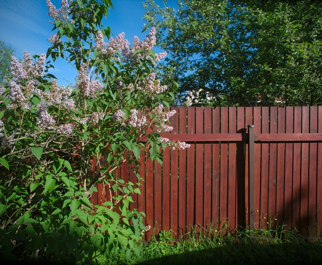 Steps to restore your timber fence