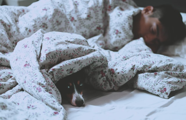 Good nights sleep tips for dog and human in bed.