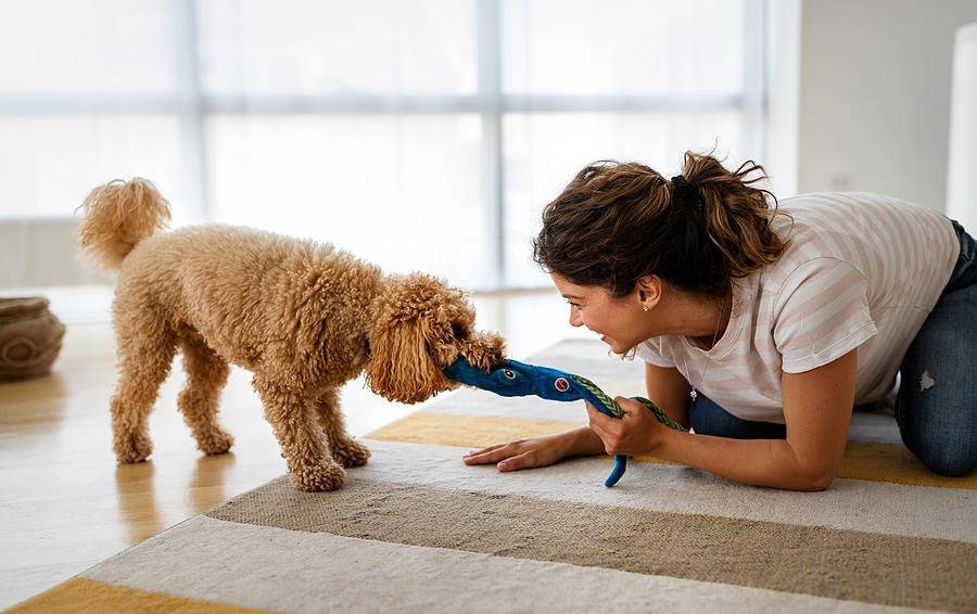 Play with your pet