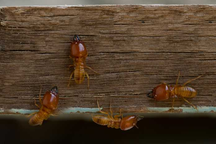 Signs you have termites and how to terminate them