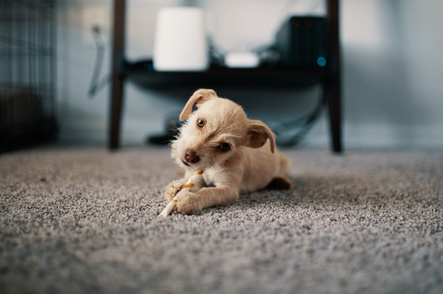 Kinks in the carpet: how to get rid of them and straighten the carpet