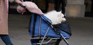 Make the outdoor adventures of your pet easy with a pet stroller