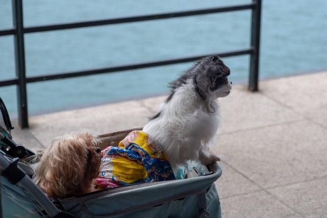 Outdoor easy pet stroller