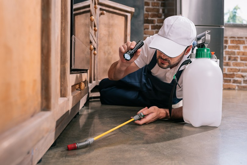 Pest control man from expert company