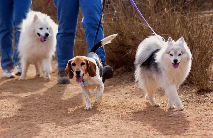 dog walking tips every pet parent must know about