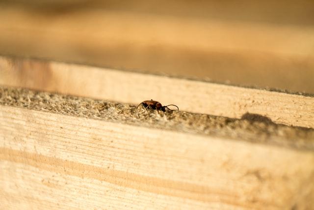 Dangerous pest termite home