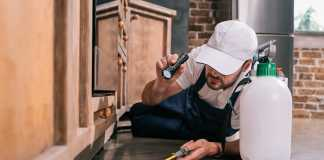 5 Pests That Could Be Damaging Your Home