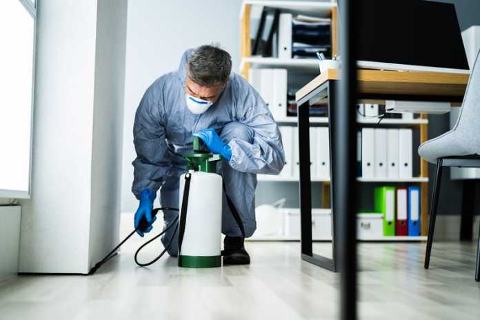 When do you know it's time to consider pest control services?