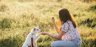 Puppy Training Timeline