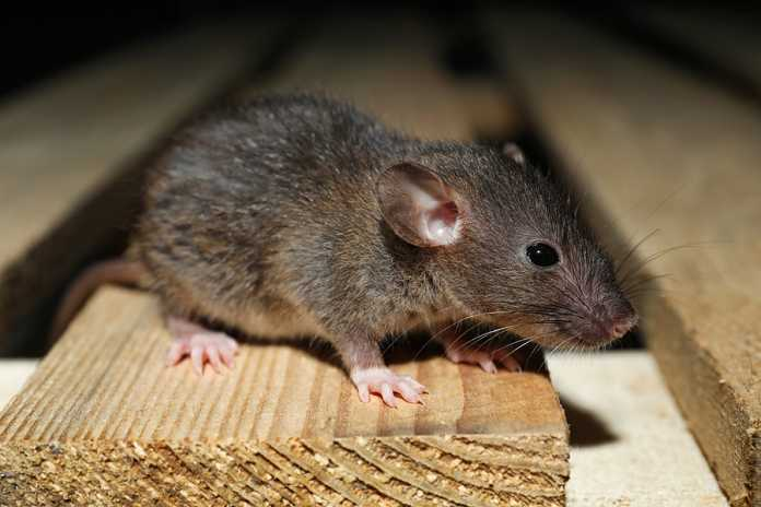 signs it's time to call pest control